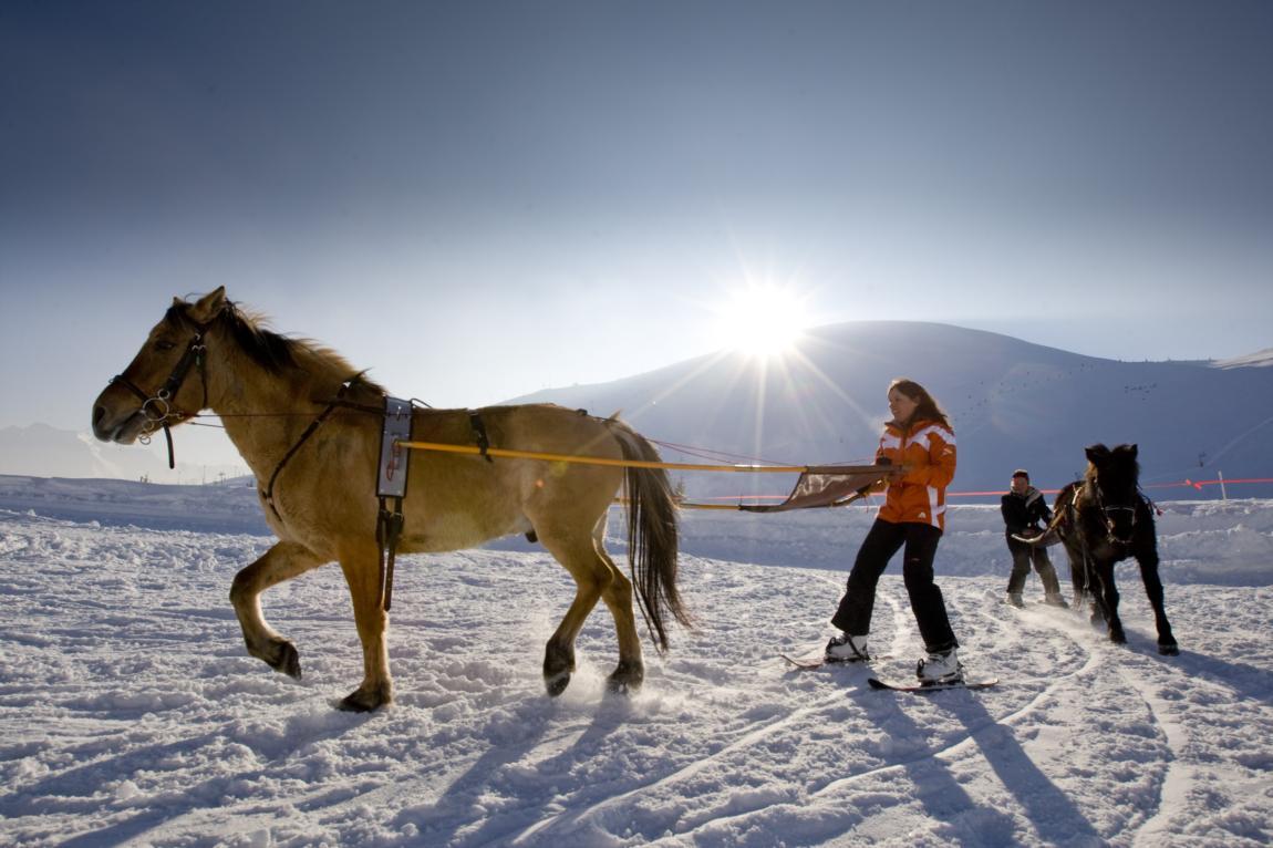 Ski joëring Alpe d'Huez